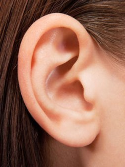 54eb698451151_-_9-things-you-didn-t-know-about-your-ears-mdn