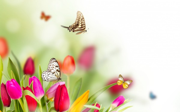 Spring-Flowers-And-Butterflies-background-HD